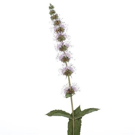 APOTHECARY Aromatherapy Spray MIĘTA PIEPRZOWA 15 ml